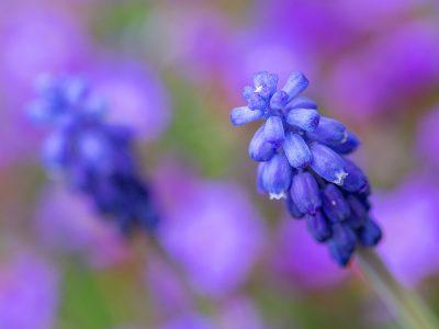 Blume1vvvvvvvvvvv